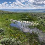 upper gunnison wet meadows project
